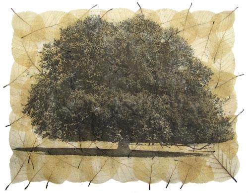 fagus-tree-etching-janetfrench-emmabuckmaster
