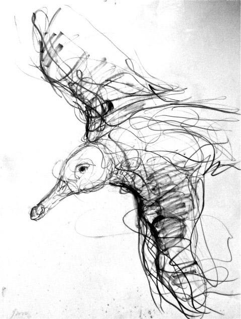 jason-gaythorne-hardy-seagull-drawing