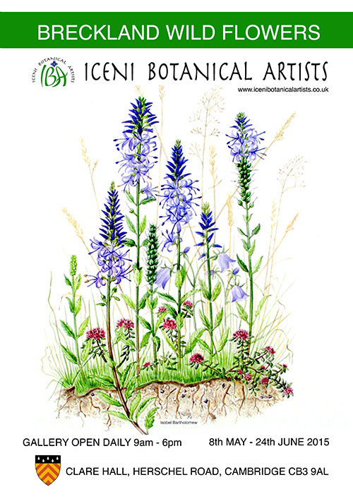 iceni-botanical-artists-exhibition-clare-hall-cambridge-2015
