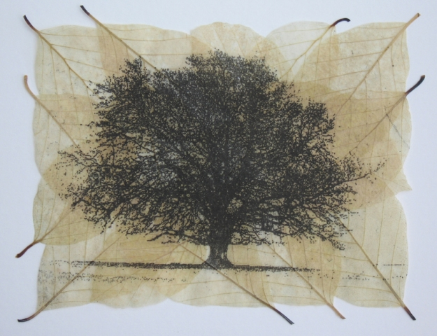 buckmaster-french-fagus-II-etching-on-beech-leaves