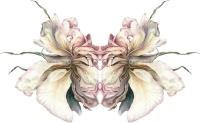 julia-groves-the-imaginal-rose-2018