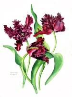 alison-jones-purple-parrot-tulips-watercolour-40x35cm