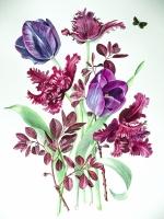 alison-jones-tulipmania-watercolour-40x35cm